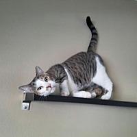 Adopt A Pet :: Wyatt - Orlando, FL