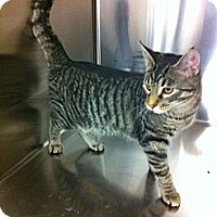 Adopt A Pet :: Bailybobo - Pittstown, NJ
