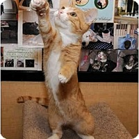 Adopt A Pet :: Quinn - Farmingdale, NY