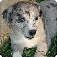 Adopt A Pet :: Bridget - Richmond, VA