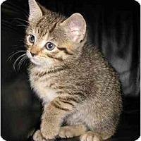 Adopt A Pet :: Cici - Bristol, RI