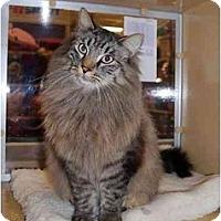 Adopt A Pet :: Fuzzy Baldor - Modesto, CA