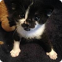 Adopt A Pet :: Payten - Edmonton, AB