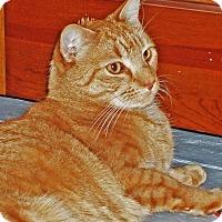Adopt A Pet :: Atwood - N. Billerica, MA