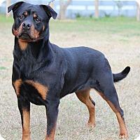Adopt A Pet :: Mariel - Alachua, GA