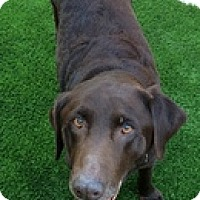 Adopt A Pet :: Colby - Torrance, CA