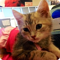 Adopt A Pet :: Beatrice - San Ramon, CA
