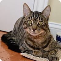 Adopt A Pet :: Bobby - Davis, CA
