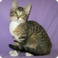 Adopt A Pet :: Zhivago - Powell, OH