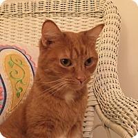 Adopt A Pet :: Nema - Monroe, GA