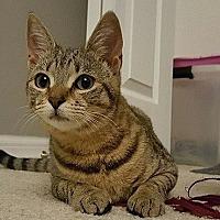 Adopt A Pet :: Bree - Tampa, FL