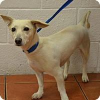 Adopt A Pet :: Lana - Miami, FL