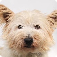 Adopt A Pet :: Doozy - Colorado Springs, CO