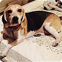 Adopt A Pet :: Traci Jo - Houston, TX