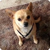 Adopt A Pet :: Sonny - Mesa, AZ