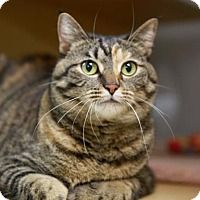 Adopt A Pet :: Serenity - Kettering, OH