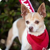 Adopt A Pet :: Pebbles - Vista, CA