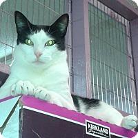 Adopt A Pet :: Hunter - Whittier, CA