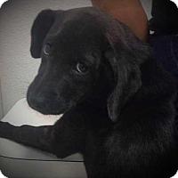 Adopt A Pet :: Tiny Dowdy - Allen, TX