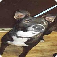Adopt A Pet :: COAL - Pearland, TX