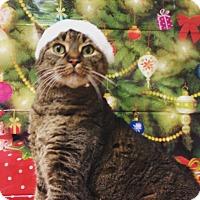 Adopt A Pet :: Bobbi - Sewaren, NJ