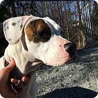Adopt A Pet :: Fergie - Greensboro, NC