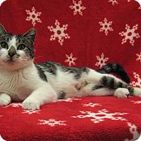 Adopt A Pet :: Joanie - Redwood Falls, MN