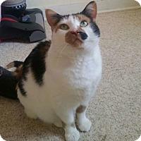 Adopt A Pet :: Tink Hunt - Edmonton, AB
