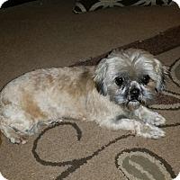 Adopt A Pet :: Ethel - Silverdale, WA