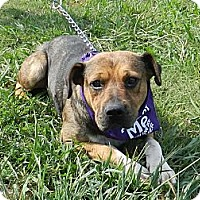Adopt A Pet :: Titus - Lawrenceburg, TN