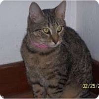 Adopt A Pet :: Tequi - Salem, OH