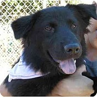 Adopt A Pet :: Midnight - Conyers, GA