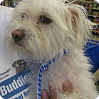 Adopt A Pet :: Sofia - Phoenix, AZ
