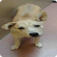 Adopt A Pet :: RANDI - North Ogden, UT