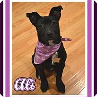 Adopt A Pet :: Baby Ali - Marlton, NJ