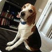 Adopt A Pet :: Brian Alexander - Phoenix, AZ
