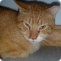 Adopt A Pet :: Wonton - Hamburg, NY