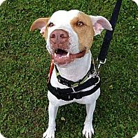 Adopt A Pet :: Roxanne - Buffalo, NY