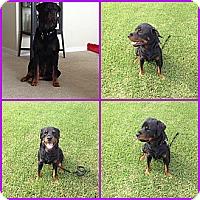 Adopt A Pet :: Rocky - Orlando, FL