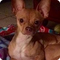 Adopt A Pet :: Karma - Edmond, OK