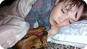 Dog Adoption Cornwall Ontario