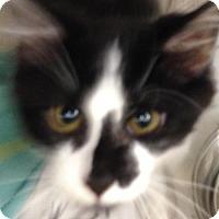 Adopt A Pet :: Emmett - Colorado Springs, CO