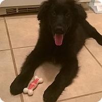 Adopt A Pet :: Mayhem - Winchester, VA