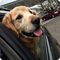 Adopt A Pet :: Dallas - Cheshire, CT