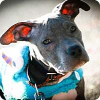 Adopt A Pet :: Tevin - Eugene, OR