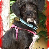 Adopt A Pet :: SUSIE - Riverside, CA