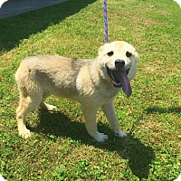 Adopt A Pet :: Sunny - Clearwater, FL