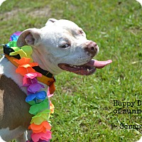 Adopt A Pet :: Scrappy - Hazlehurst, GA