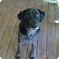 Adopt A Pet :: Bitzer - Elk River, MN