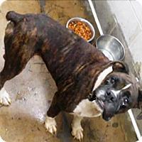 Adopt A Pet :: I'M ADOTPED Mikey Hegwood - Oswego, IL
